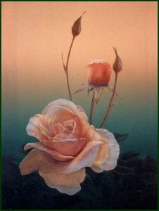 . . . is a Rose.