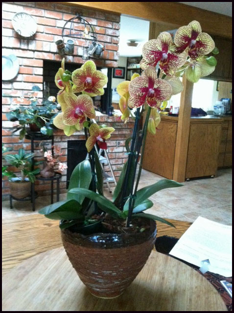 Orchids from the S F flower and garden show in on of my pots.