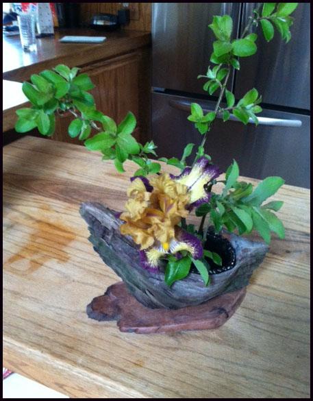 Knot Hole Vase